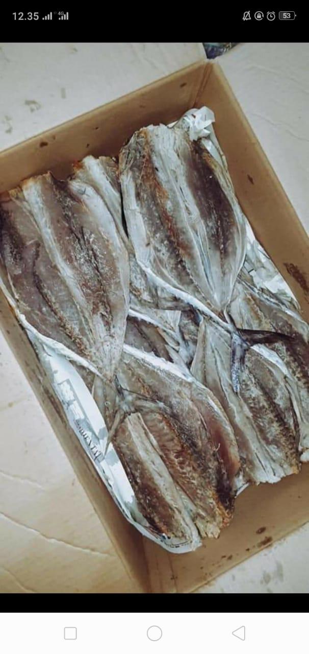 Ikan Tongkol Walang
