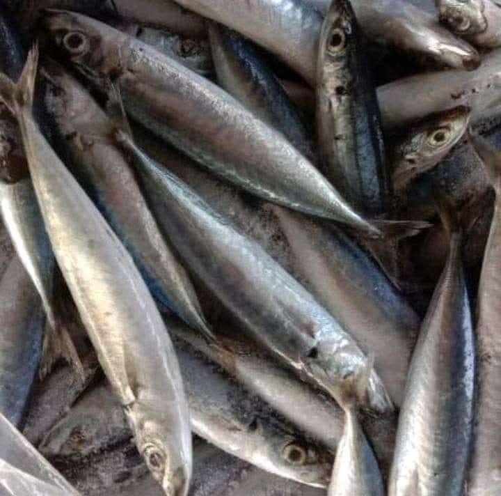 Ikan Layang