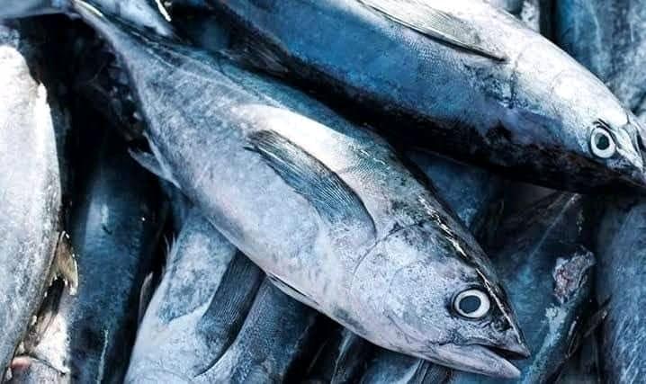 Ikan Tuna Segar